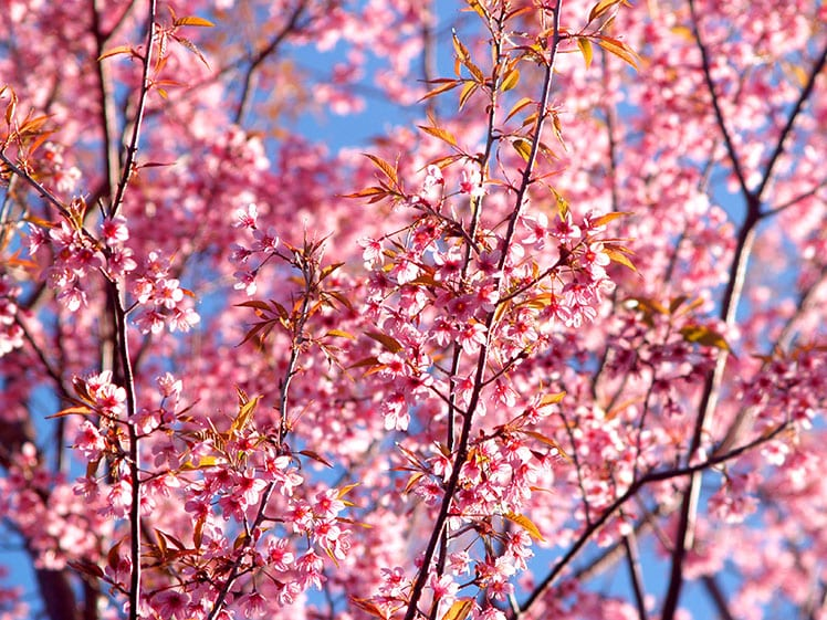 Spring Blooms by Petal & Leaves